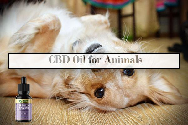 CBD Oil for Animals cbd oil for anxiety